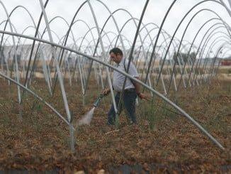 Los agricultores, temerosos de este calor, preparan los campos