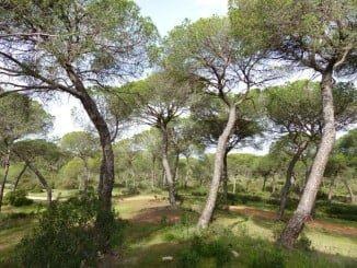 Mejoras en las vías rurales de Moguer