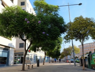 El Ayuntamiento quiere reforestar los 3.000 alcorques vacíos en la ciudad