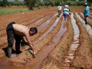 Acceder al Plan de Fomento al Empleo Agrario requiere una serie de requisitos