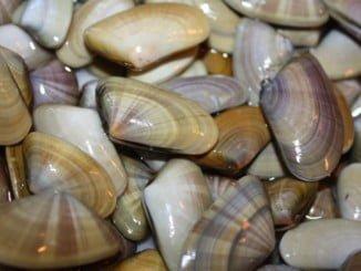 También está permitido faenar en las aguas de Mazagón y el espacio marítimo de Doñana