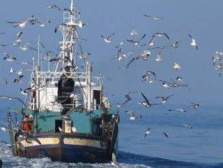 El acuerdo permitirá que faenen otros 6 buques congeladores españoles