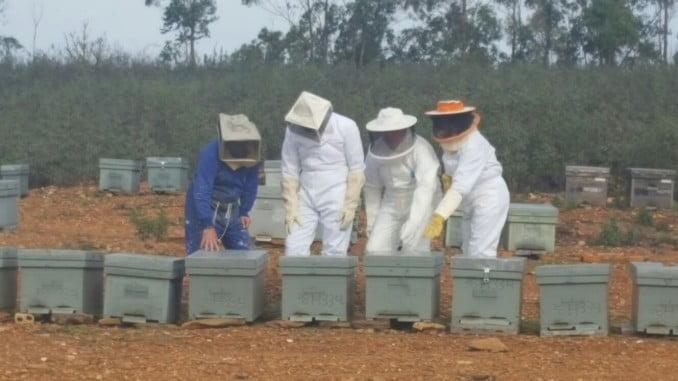 La apicultura onubense recibirá casi 5 millones de euros en ayudas de aquí hasta el 2020