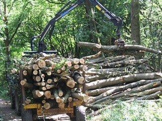 En la provincia se llevarán a cabo actuaciones forestales en un total de 5 municipios