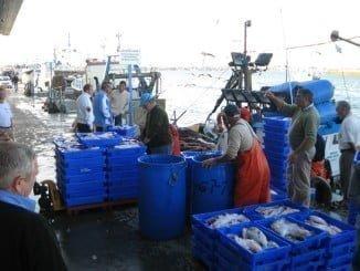 Durante el pasado año la Lonja de Isla Cristina registró descargas de alrededor de 10.000 toneladas de pescado y marisco frescos