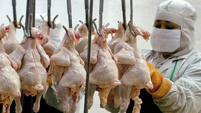 Uno de los sectores más afectados por la crisis es el avícola