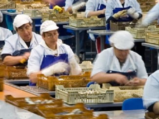 Los empleados de la fábrica cuidan de hacer esa calidad posible