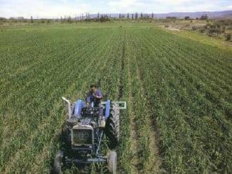 El sector agrícola es, después del de Servicios, el que más autónomos tiene en Andalucía