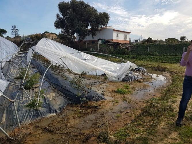El tornado arrancó los plásticos de las plantaciones, rompiendo a su paso los hierros que los sustentan