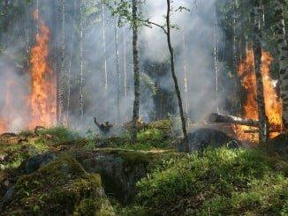 La policía andaluza esclareció el 66% de los incendios forestales investigados  en 2016