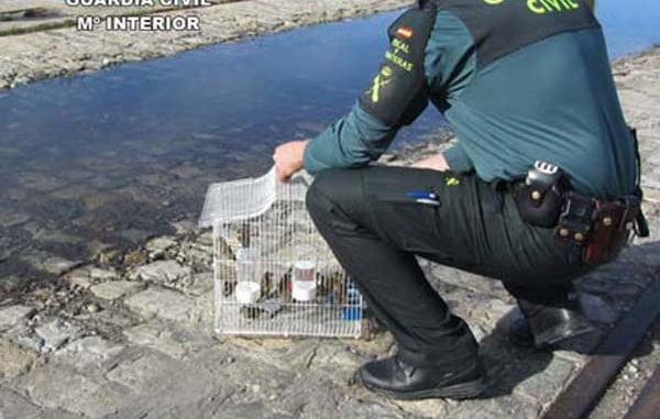 Resultado de imagen de intervenidas 14 aves huelva