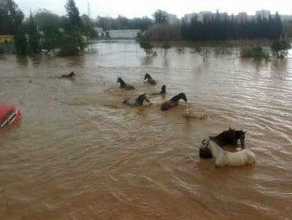 Estado en el que se encontraban algunas zonas de la provincia de Málaga tras el temporal de este invierno