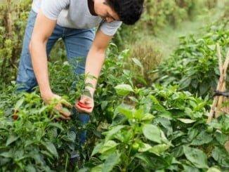 Cerca de 215.000 agricultores y ganaderos de Andalucía podrán beneficiarse de esta medida