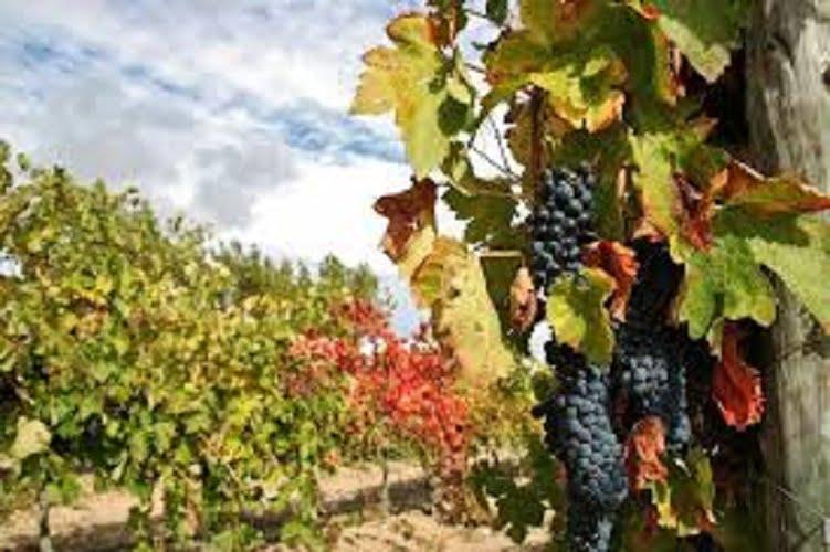 Las ayudas para reconvertir el viñedo andaluz para 2017 superan los 2 millones y medio de euros