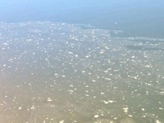 Desde el mismo muelle del embarcadero de Punta Umbría se podía ver el vertido contaminante a la ría.