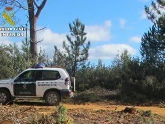 El Seprona investiga los hechos porque cazar fuera de la línea de retranca supone un peligro para los cazadores con licencia