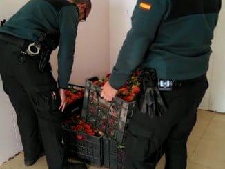 La Guardia Civil devolvió los 200 kilos de fresas robadas a su legítimo propietario