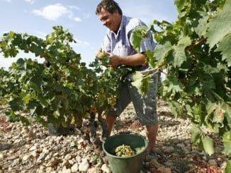 Unos 795.000 productores podrán solicitar las ayudas, cuyo plazo de presentación finaliza el 30 de abril
