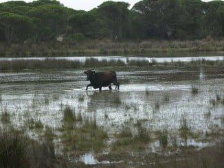 Doñana es uno de los humedales más importantes del mundo