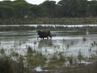 El reportaje propone visitar el Parque Nacional de Doñana y las Minas de Río Tinto