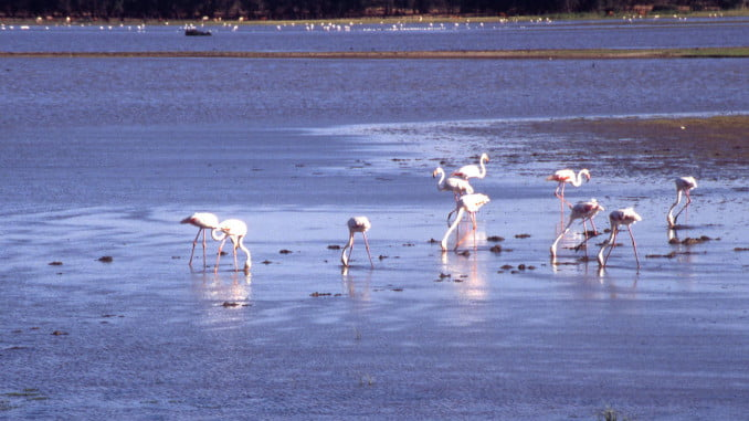 Se abordarán las medidas de conservación que se desarrollan en Doñana y en otros espacios naturales