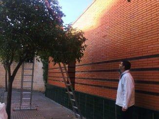 La recogida de naranjas en Valverde tiene un doble objetivo: generar empleo y mantener las calles limpias