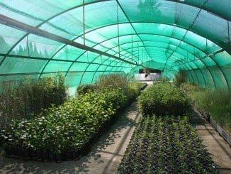 El Vivero Provincial pone en marcha la campaña de suministro de árboles y arbustos