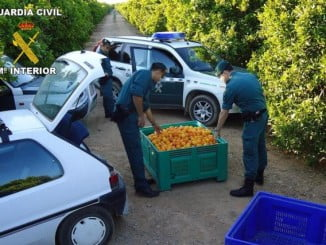 Los robos en el campo se suceden y luego se vende ilegalmente