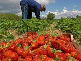 Los agricultores y ganaderos podrían ver mermada su ayuda, asegura UPA