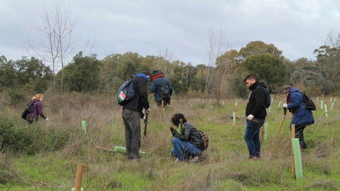 Reforestación en el Arboreto del Villar