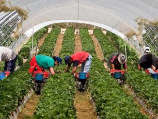Los trabajadores marroquíes comenzarán a llegar a finales de este mes de enero a Huelva