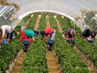 La agricultura es el sector que más empleo ha generado en el cuarto trimestre del año en Huelva