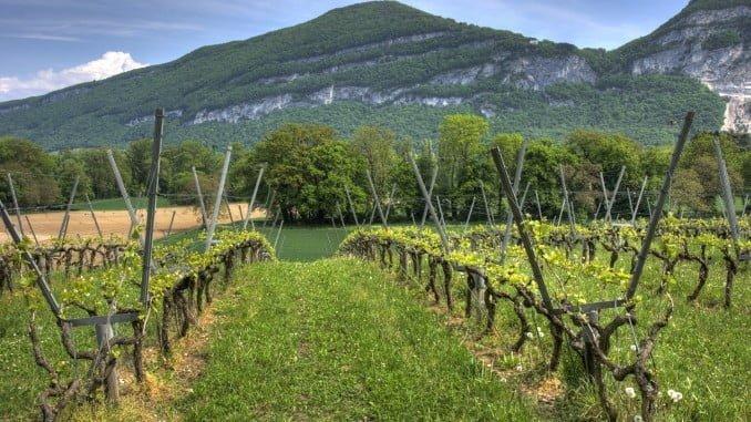 La producción de uva declarada ha sido de 5.896 millones de kg