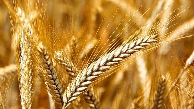 Entre otras ayudas se ha aprobado la asignación de 1.502.000 euros para las líneas de actuación relacionadas con la calidad de las variedades vegetales y la certificación de los materiales de reproducción