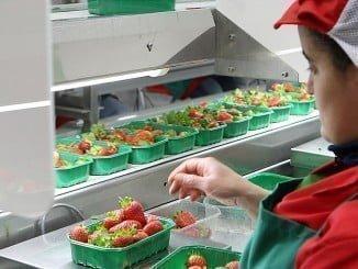 El paro baja en enero en la provincia por el comienzo de la campaña agrícola.