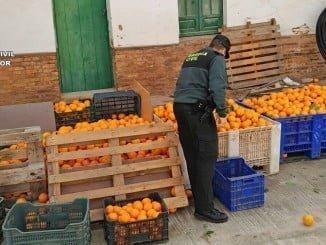 La Guardia Civil ha intervenido varios kilos de naranjas y mandarinas robadas en sendas operariones