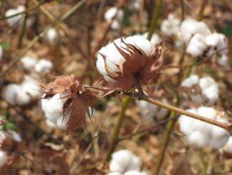 Entre estas ayudas se encuentran el pago específico al cultivo del algodón
