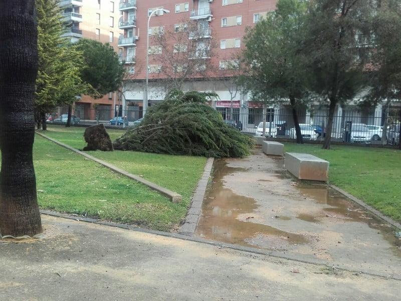 Incidencias en el Parque Zafra donde el viento ha arrancado árboles de cuajo