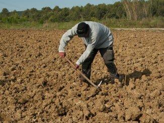 El paro sube en Agricultura en 4.102 personas (2,42%)