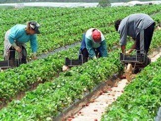 Las propuestas van dirigidas a dar respuesta a las demandas del sector agrario