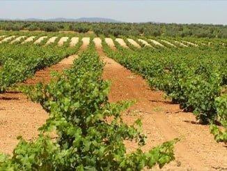 UPA advierte de las desproporcionadas subidas del IBI en las explotaciones agrarias