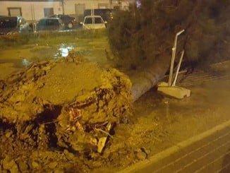 Los árboles arrancados de cuajo por el tornado