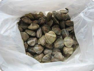 La existencia de dos tamañas de chirla en el mercado afectaría a la pesquería en Huelva