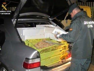 El transporte era realizado en un vehículo no isotermo que garantice la cadena de frío