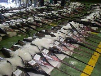 La reunión del grupo de trabajo para la asignación de cuotas de pez espada del Mediterráneo se ha celebrado en Vilamoura (Portugal)