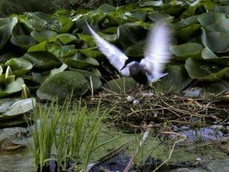Recuperación de flora amenazada en la Laguna Primera de Palos