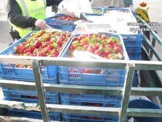 La Guardia Civil ha incautado más de 9000 kilos de frutos en los últimos 7 días en diferentes localidades de Huelva