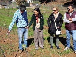 La subdelegada y el alcalde de Galaroza en la plantación de manzanos