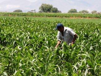 El paro ha crecido especialmente en Agricultura, con 7.823 parados más