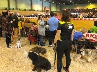 En las exposiciones caninas se ha contado con más de 2.500 perros de 200 razas distintas